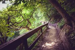 Une promenade paisible par les bois Photographie stock