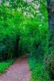 Une promenade par le jardin botanique spectaculaire, feuillu et vert du ³ n de Gijà un après-midi d'août en 2018 images libres de droits