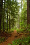 Une promenade par les bois Images stock