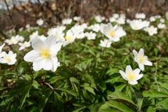 Une promenade par les bois au printemps image libre de droits