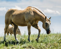 Une promenade sur la prairie Photos libres de droits