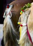 Une queue de cheval Images stock