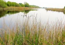 Une réserve naturelle paisible Photo stock