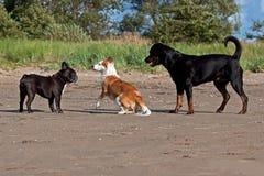 Une réunion de chien sur la plage Photos stock