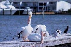 Une réunion des oiseaux d'eau images libres de droits