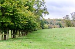 Une rangée d'ensemble d'arbres dans un domaine anglais de pays Photo stock