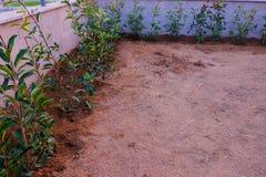 Une rangée de Photinia Robin rouge a juste planté photographie stock