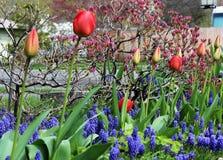 Une rangée des bourgeon floraux magnifiques dans le printemps photos libres de droits