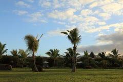 Une rangée des maisons et la pelouse et les paumes Photos libres de droits
