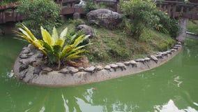 Une rangée des tortues se dorant sous le soleil par l'étang Photos libres de droits