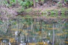 Une rivière à Tampa Image stock