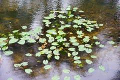 Une rivière à Tampa Photos libres de droits