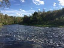 Une rivière dans la forêt Image libre de droits
