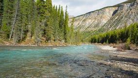 Une rivière de montagne dans le Canada clips vidéos