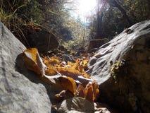 Une rivière sèche dans la saison d'automne Photographie stock libre de droits