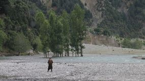 Une rivière traversant une forêt montagneuse photos libres de droits