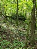 Une roche dedans profondément des bois photo stock