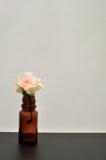 Une rose blanche Image libre de droits