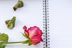 Une rose défraîchie de rouge avec des feuilles est sur les feuilles blanches Photographie stock libre de droits