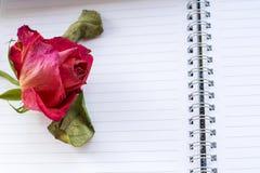 Une rose défraîchie de rouge est sur les feuilles blanches Photos libres de droits