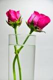 Une rose dans un verre de l'eau Images libres de droits