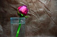 Une rose dans un verre de l'eau Photos libres de droits