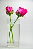 Une rose dans un verre de l'eau Photo libre de droits
