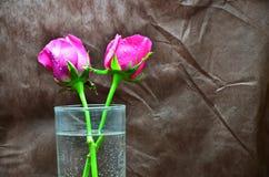 Une rose dans un verre de l'eau Images stock