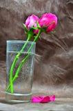 Une rose dans un verre de l'eau Photos stock