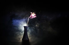 Une rose de fanage signifie l'amour perdu, divorce, ou de mauvaises relations, morts ont monté sur le fond foncé Photo stock