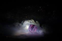 Une rose de fanage signifie l'amour perdu, divorce, ou de mauvaises relations, morts ont monté sur le fond foncé Photographie stock