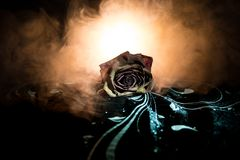 Une rose de fanage signifie l'amour perdu, divorce, ou de mauvaises relations, morts ont monté sur le fond foncé avec de la fumée Images stock