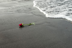 Une rose de rouge sur la plage noire de sable Image stock
