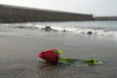 Une rose de rouge sur la plage noire de sable Photographie stock libre de droits