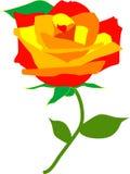 Une rose pour l'amour image libre de droits