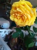 Une rose pour mon amour Photo stock