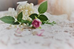 Une Rose rose Image stock