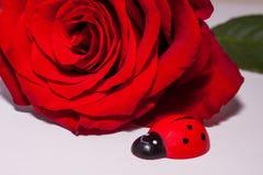 Une rose simple de rouge avec un oiseau en bois de dame Photographie stock