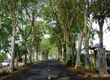 Une route allant par un tunnel des arbres verts Photo stock