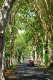 Une route allant par un tunnel des arbres verts Image stock