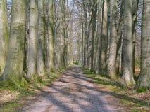 Une route avec sur les deux arbres de côtés Photographie stock libre de droits