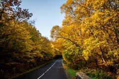 Une route colorée d'automne Photographie stock libre de droits
