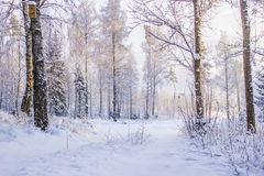 Une route de campagne en hiver suédois Image stock