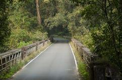 Une route de ciment passant par une forêt Photo stock