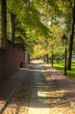 Une route de pavé rond sous un auvent des arbres avec un trottoir de brique Photographie stock libre de droits