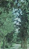 Une route entre les arbres photographie stock