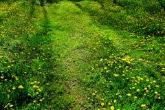 Une route isolée au milieu du champ de l'herbe verte et de l'acrpet des pissenlits photographie stock