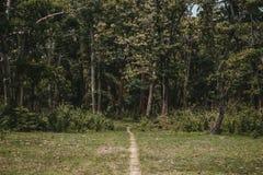 Une route mince allant à une forêt épaisse verte image libre de droits