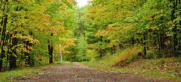 Une route par les bois Photographie stock