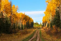 Une route rugueuse de gravier par une forêt d'automne image libre de droits